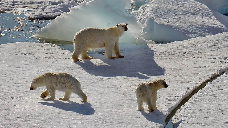 Где Арктике нашли финансирование