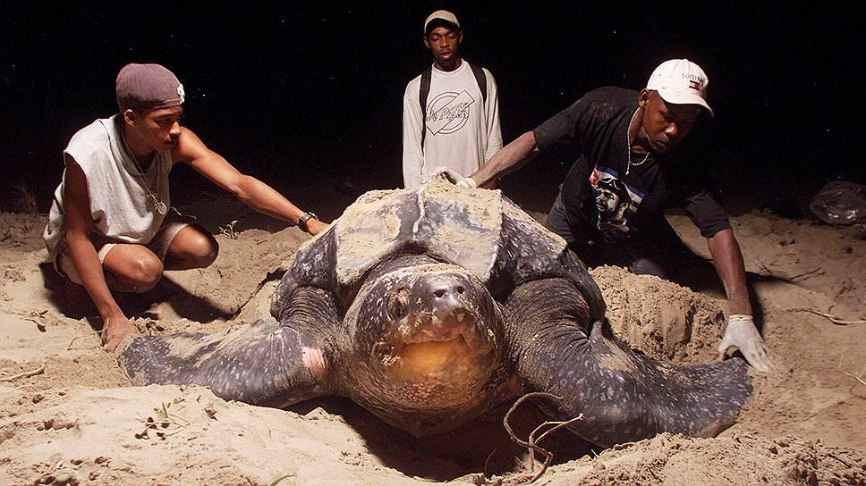Бесконтрольная добыча песка вредит природе и самому человеку