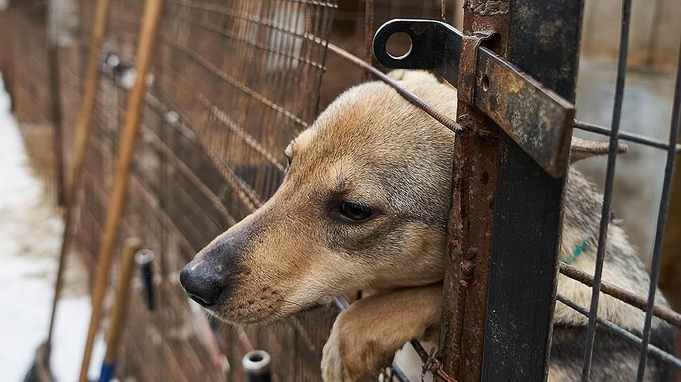 Жестокое обращение с животными предлагают считать преступлением средней тяжести
