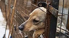 Животных защитят решеткой