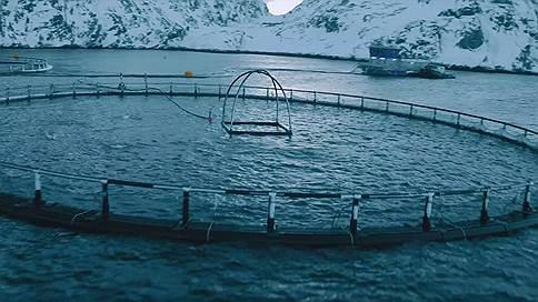 «Русскую аквакультуру» пересчитали // Компания назвала ценовой диапазон в рамках SPO