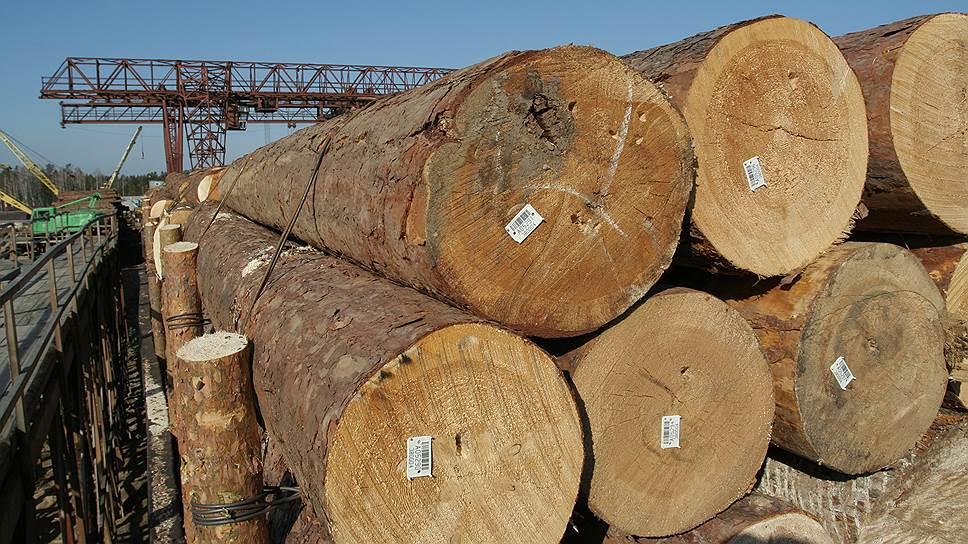В Генпрокуратуре увидели риск потери «наиболее ценных» лесов из-за незаконных рубок