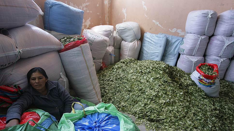 В Боливии выращивание коки частично легализовано — в рамках ежегодных квот