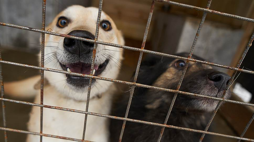 Боль и страдания животных прописали в Уголовном кодексе