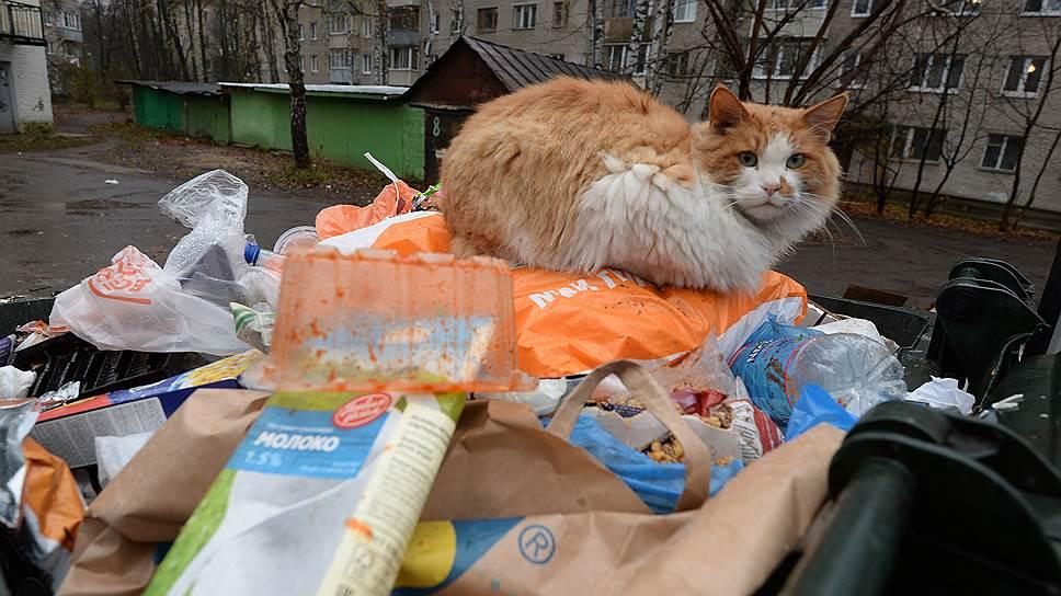 Депутаты Госдумы утвердили корректировки мусорной реформы