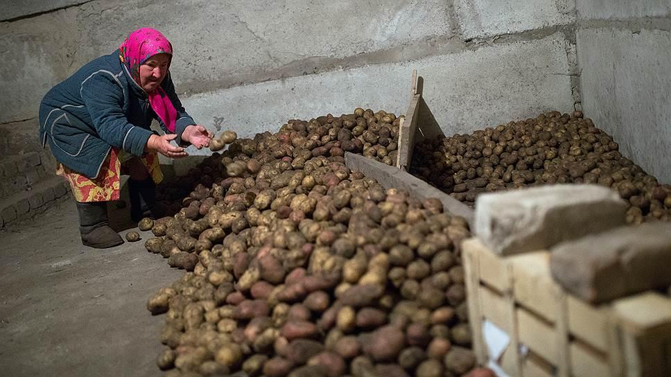 Как в России снизился уровень самообеспеченности картофелем
