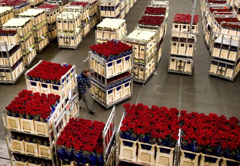 Крупнейшими производителями цветов являются такие страны, как Нидерланды, Кения, Колумбия и Израиль