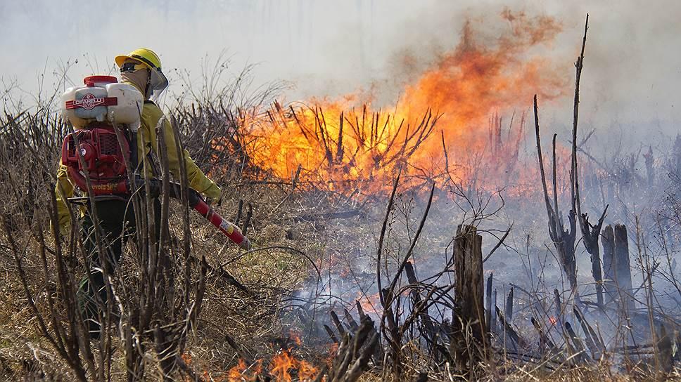Госдума приняла закон о штрафах для чиновников за сокрытие возгораний в лесах