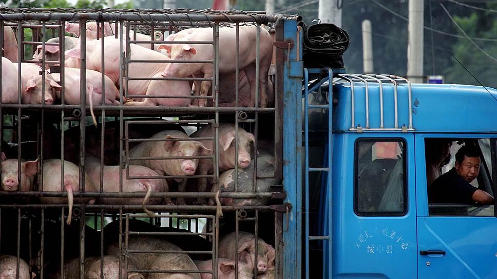 Китайские свиньи набирают вес на американском корме