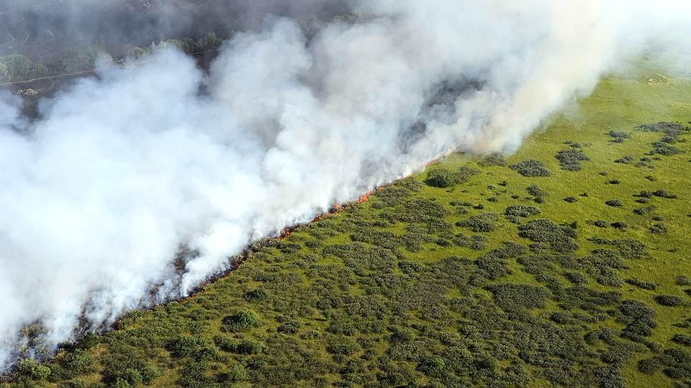 Где в России горят леса