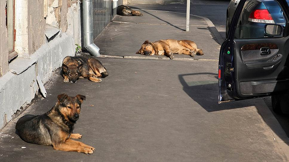 Немецкие футболисты против убийств бездомных животных