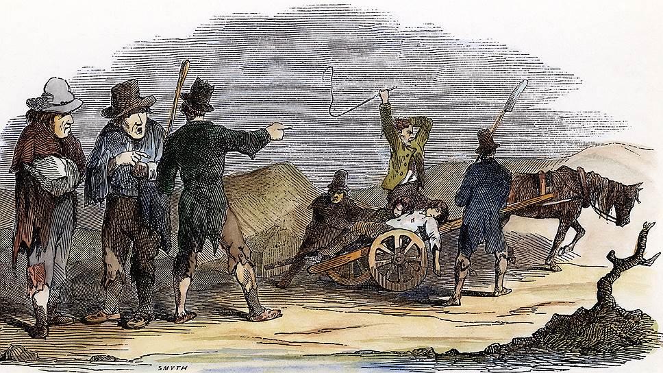 Любовь ирландцев к картошке стала причиной массового голода, когда весь урожай погиб