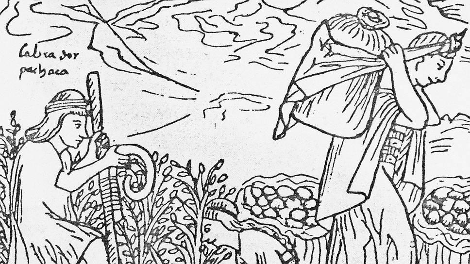 Первые огороды с картошкой обнаружены на территории нынешнего Перу