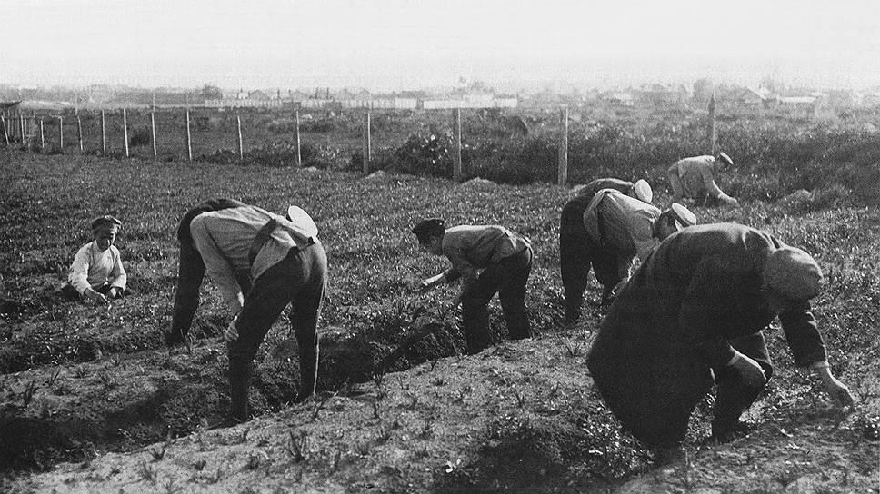 Служащие Губкомгособра на огородах, разбитых на месте разрушенных кварталов. Ярославль, 1920 год