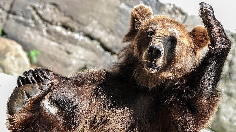 Россияне жалуются на медведей, раскапывающих могилы