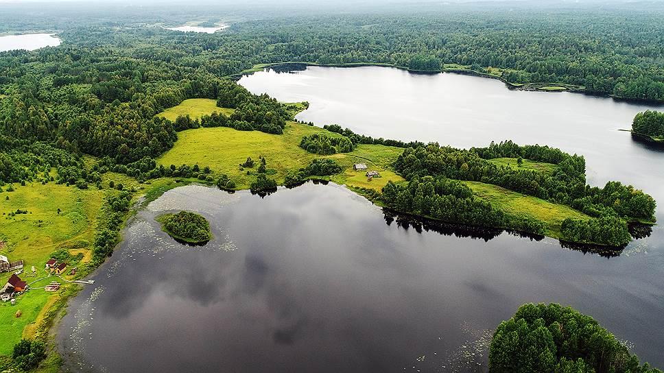 WWF озабочен скоростью утраты неосвоенных лесных массивов