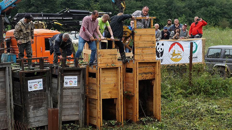 Прибытие контейнеров с зубрами на Кавказ