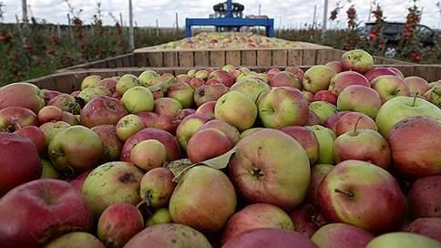 Полиция оценит урожай яблок // Возбуждено дело о мошенничестве с крупной страховкой