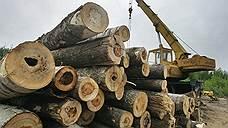 WWF просит Генпрокуратуру заглянуть в краснодарские леса