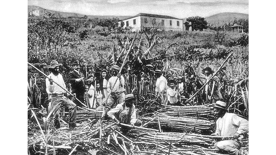 Португальцы на Мадейре первыми почувствовали сладкий вкус денег