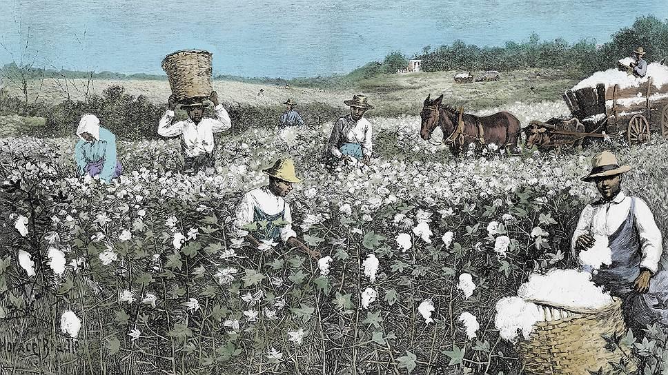 Колонизаторы распространяли по миру новые сельскохозяйственные культуры, вредителей и болезни