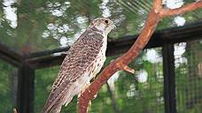 Птица на 2,7 млн рублей