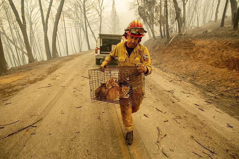 Пожарный помогает спасать от огня домашних животных