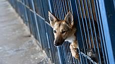 Животных оградили законом
