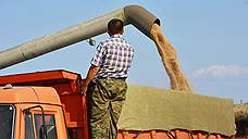 Пшеница и лес активнее покидают Россию