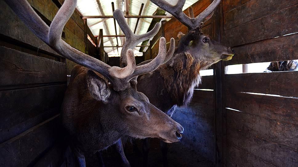 Депутаты разработали поправки, легализующие охоту в вольерах