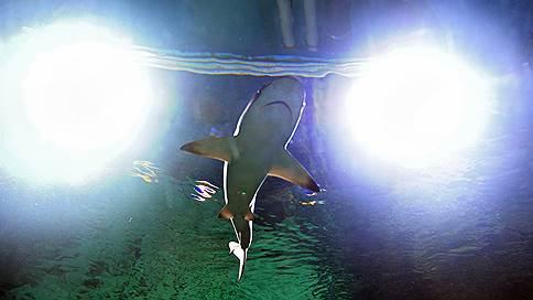 Где можно стать жертвой акулы и что не так с почерком американцев  / Любопытные сообщения и исследования 4–8 февраля