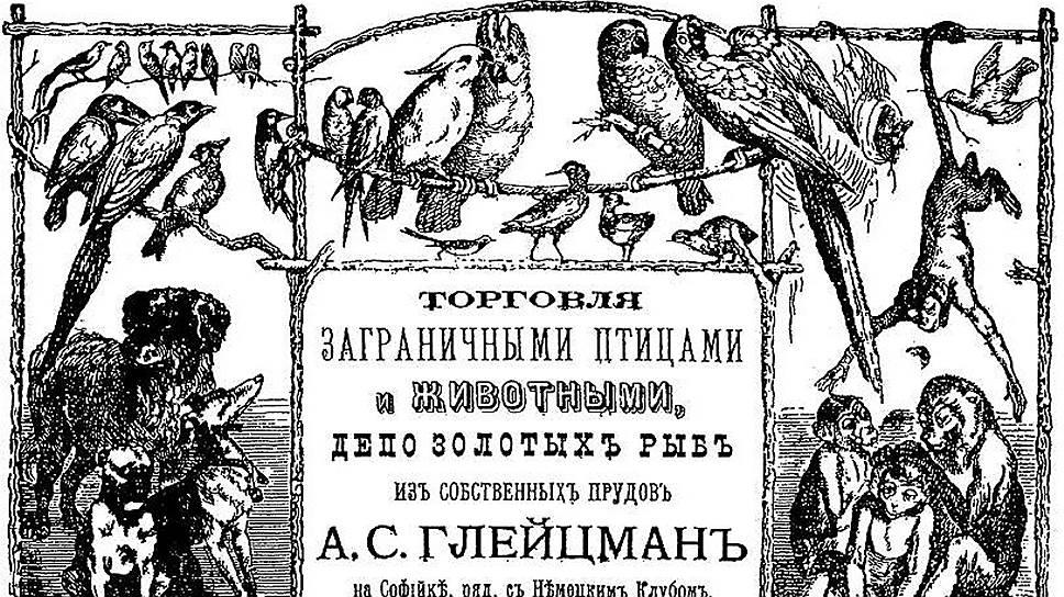 Русские умельцы с удовольствием покупали иноземных птиц и начинали разводить их на экспорт