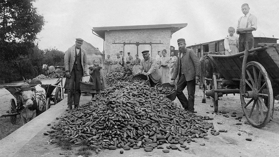 Русские и польские сельхозрабочие в Германии получали сдельную оплату деньгами или шестую часть собранного ими урожая