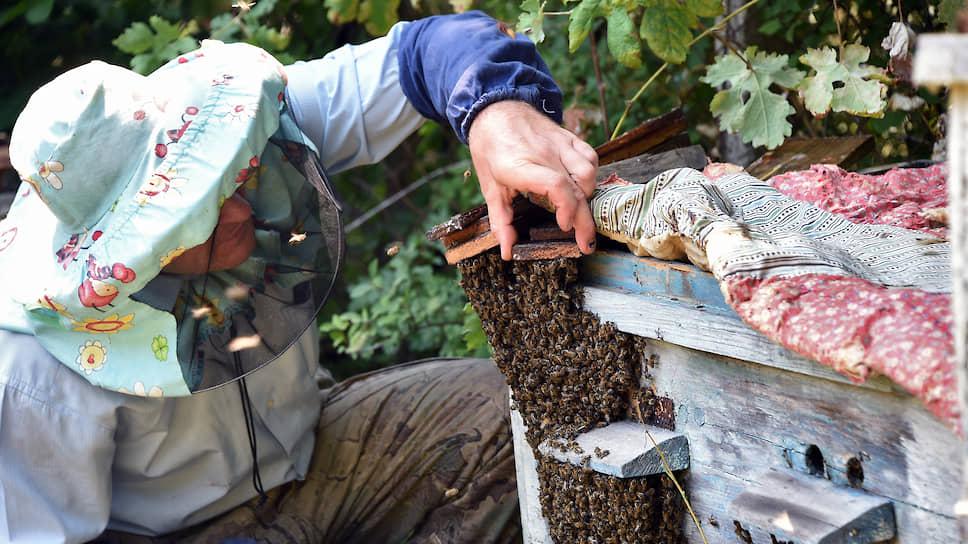 Как Следственный комитет заинтересовался массовой гибелью пчел