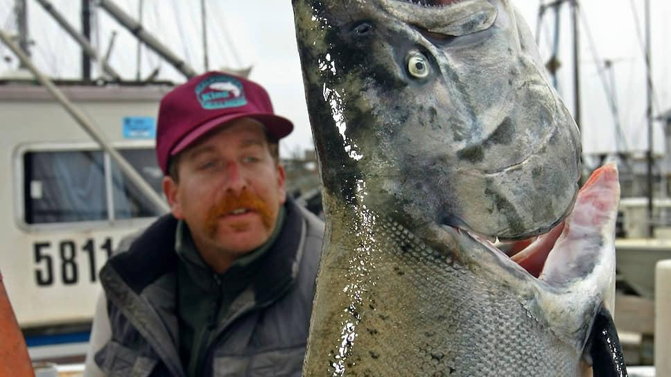 С каждым годом все больше лососевых выращивается в неволе и все меньше вылавливается рыбаками