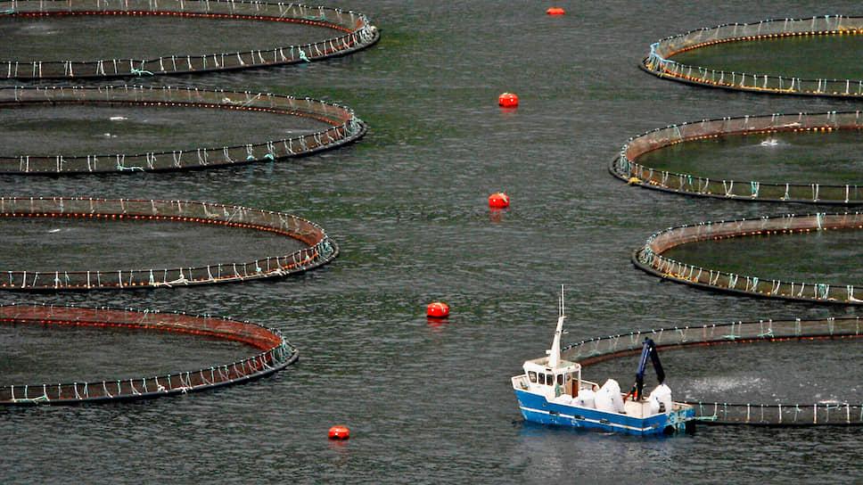 Ежегодно методом аквакультуры производится по два с небольшим блюда из лосося на каждого жителя планеты