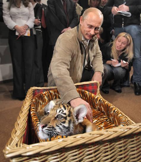 Несмотря на сложный график, Владимир Путин <b>находит время для общения с дикими животными</b>. В 2008 году он получил в подарок в день своего рождения уссурийскую тигрицу (на фото). В 2010 году поил из бутылки новорожденного лосенка в парке «Лосиный остров». В том же году совершил экспедицию на Землю Франца-Иосифа, где надел спутниковый ошейник на белого медведя. В 2012 году на дельтаплане показал стерхам путь на юг. В 2013 году в приморском аквариуме пожал лапу моржу
