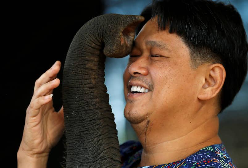 Паттайя, Таиланд. Ветеринар играет со своим пациентом — слоном по кличке Фа Джам