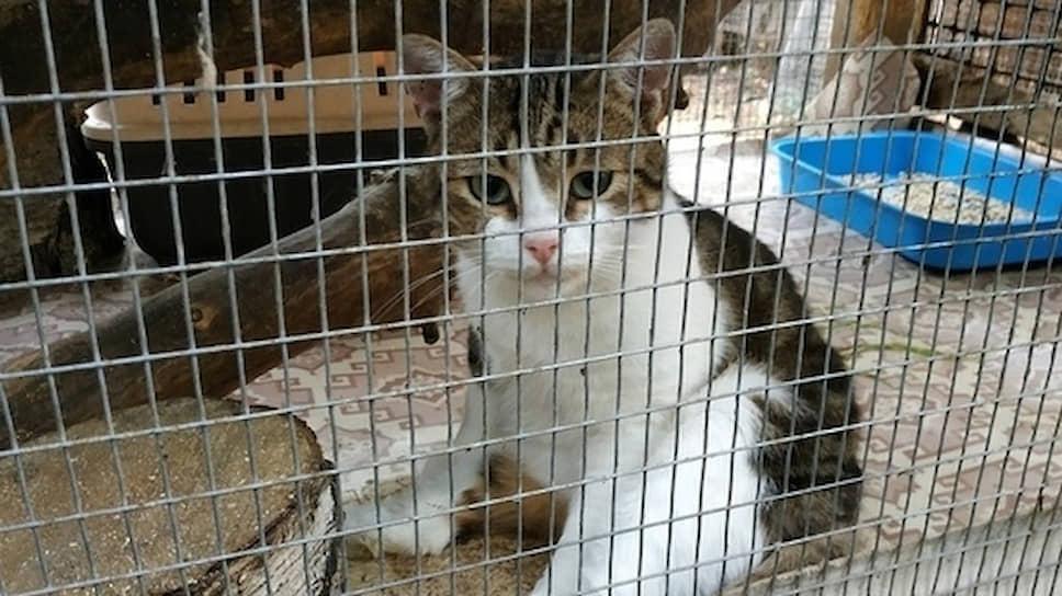 По мнению следствия, «наркокурьером» в деле Эдуарда Долгинцева был кот