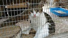 «Кот-наркокурьер» сбежал до суда