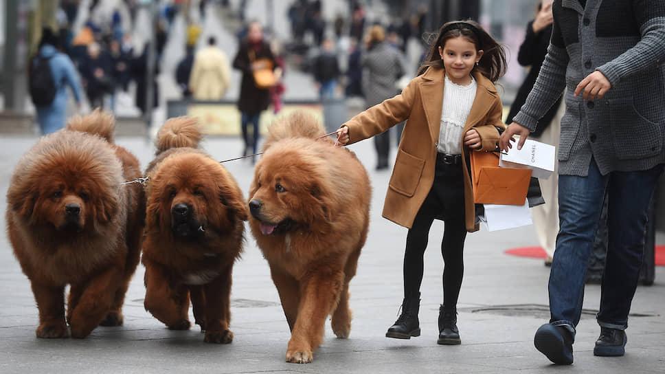 Москва, Россия. Девочка и три собаки на поводке