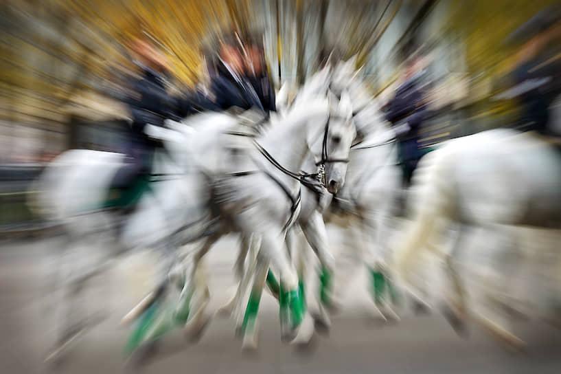 23 октября, Москва. Показательные выступления конной полиции на Международной выставке средств обеспечения безопасности государства Interpolitex
