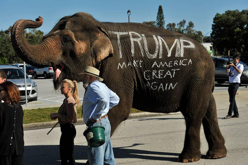 В 1874 году Томас Нэст также высмеял Республиканскую партию, изобразив ее в виде спасающегося слона, которого лягает осел в львиной шкуре. Художник часто использовал двух этих животных в карикатурах, что сделало их общенациональными символами крупнейших партий США