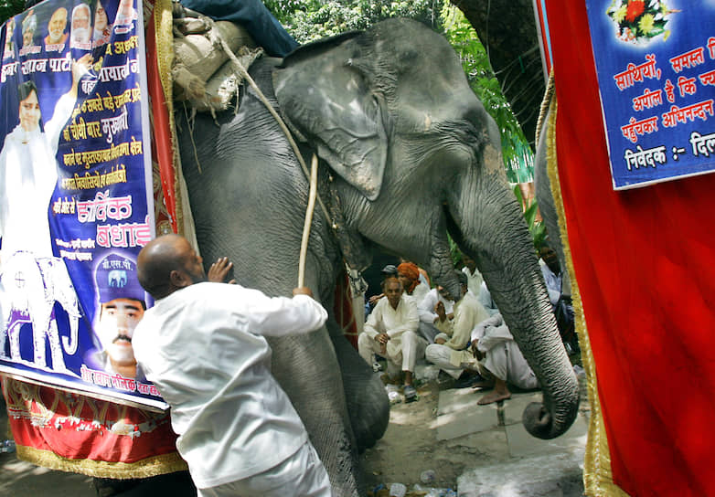 Из-за того, что значительная часть населения Индии является неграмотной, с 1951 года для опознавания партий в бюллетенях используются графические символы. Так, символом партии «Индийский национальный конгресс» является рука, партия «Бхаратия джаната» представлена цветком лотоса, а «Бахуджан Самадж» — слоном <br>На фото: погонщик слонов, несущих портреты лидера партии «Бахуджан Самадж» Маявати около резиденции в Нью-Дели, май 2007 года