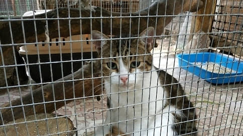 «Кота-наркокурьера» подменили в суде  / Сбежавшее от полиции животное заменили похожим