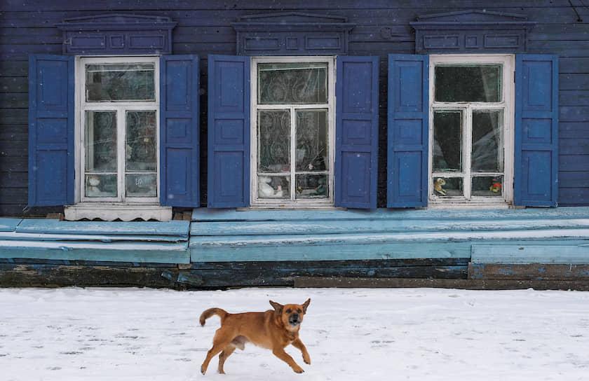 Благовещенск, Россия. Собака лает около дома с резными наличниками