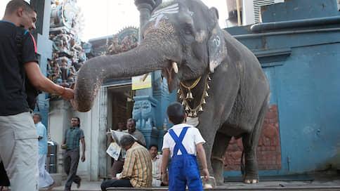 Реабилитацию слонам