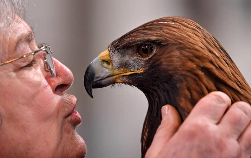 Дортмунд, Германия. 27-летний беркут со своей хозяйкой на охотничьей выставке