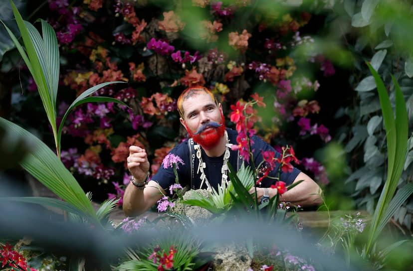 Лондон, Великобритания. Флорист на ежегодном фестивале орхидей