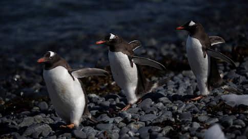 В Антарктиде льдины землю не скрыли